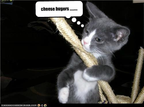 Cheezburger Image 4958001408