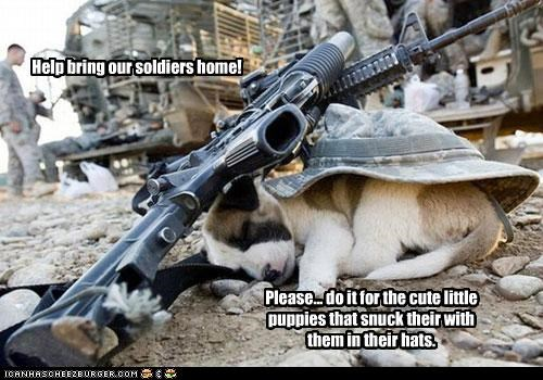 Help bring our soldiers home! Please... do it for the cute little puppies that snuck their with them in their hats.