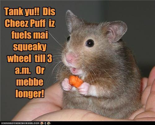 Cheezburger Image 4958130176