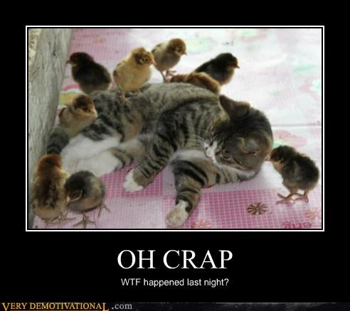 chicks Hall of Fame hilarious kitten last night wtf - 4958819072
