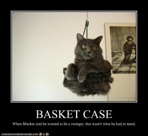 basket basket case caption captioned case cat hanging pun swinger