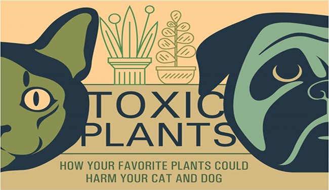 cats and dogs harmful plants inforgraphic - 4960005
