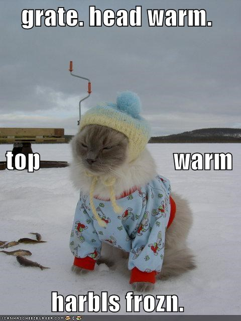 Cats clothes frozen harbls ice lolcats snow - 496006912