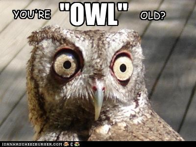 "YOU'RE OLD? ""OWL"""