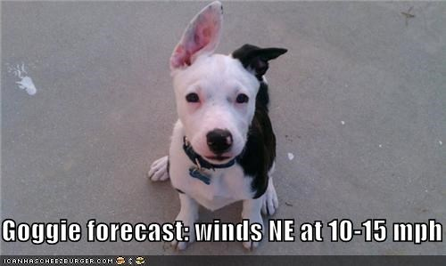 doggie forecast,ears,weather report,weatherman,whatbreed