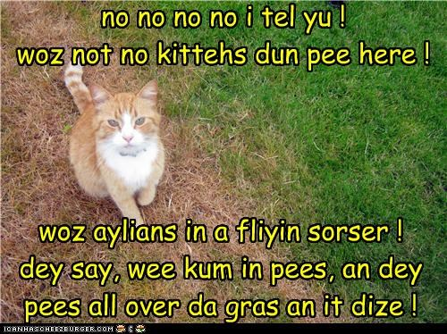 no no no no i tel yu ! woz not no kittehs dun pee here ! woz aylians in a fliyin sorser ! dey say, wee kum in pees, an dey pees all over da gras an it dize !