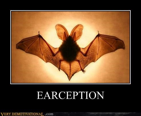 animals bat ears hilarious Inception