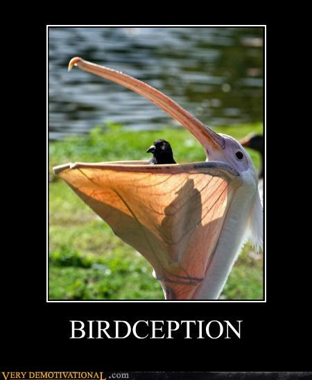 animals birds hilarious Inception pelican wtf