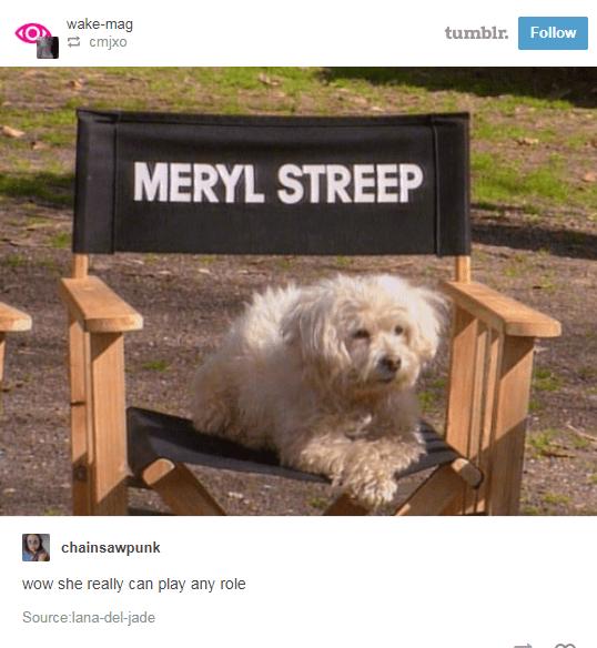 funny animals on tumblr posts
