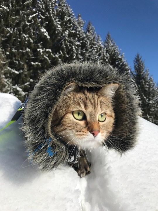 snow photos Cats - 4962053
