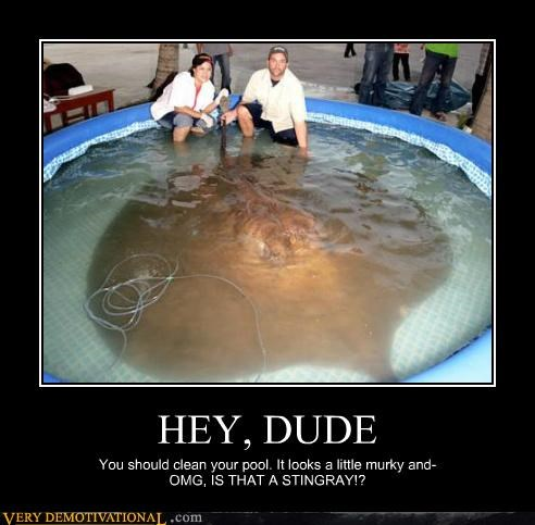 animals,huge,Pure Awesome,stingray,wtf
