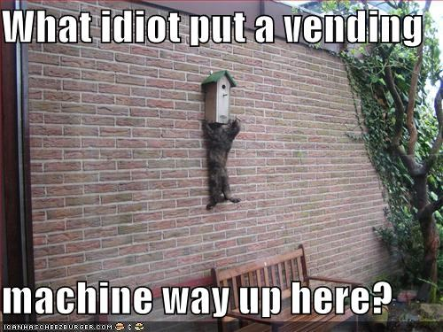 birdhouse,caption,captioned,cat,climbing,frustrating,height,idiot,put,question,up,vending machine,what
