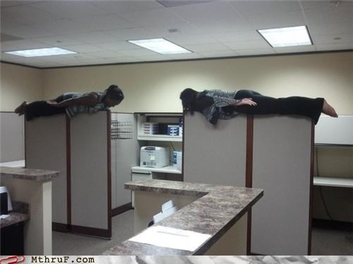 cubicle Office Planking