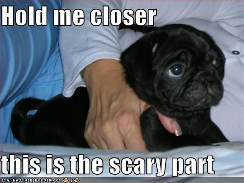 cuddles,hold me,pug,scary