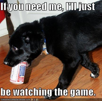 beer best of the week fetch labrador mixed breed watching the game - 4962210304