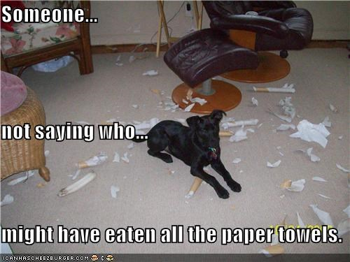 Someone... not saying who... might have eaten all the paper towels.