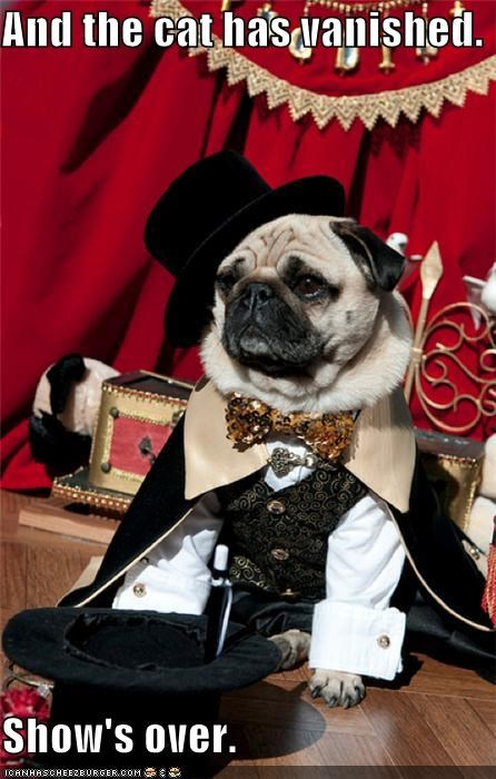 cat has vanished,costume,impressive,magic,magic show,magician,pug