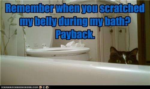 Remember when you scratched my belly during my bath? Payback.