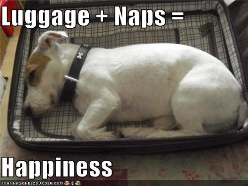 happiness jack russell terrier luggage naps sleeping - 4962378496