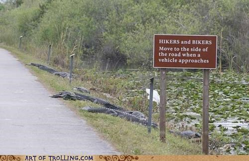 biking,gators,IRL,road,scary
