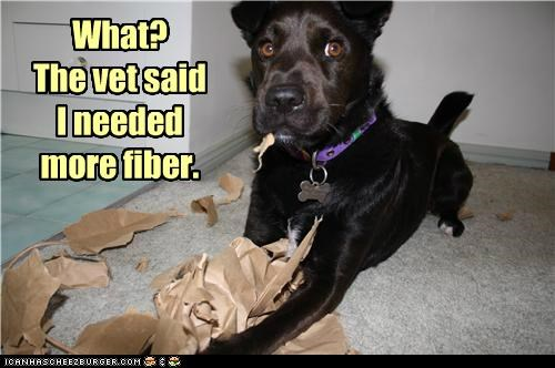 chewing,fiber,labrador,mess,mixed breed,paper bag,vet