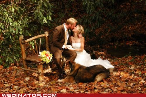 bride,dogs,funny wedding photos,groom,KISS