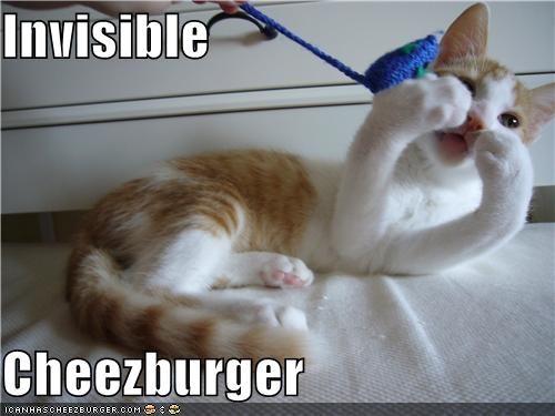 Cheezburger Image 4963443968