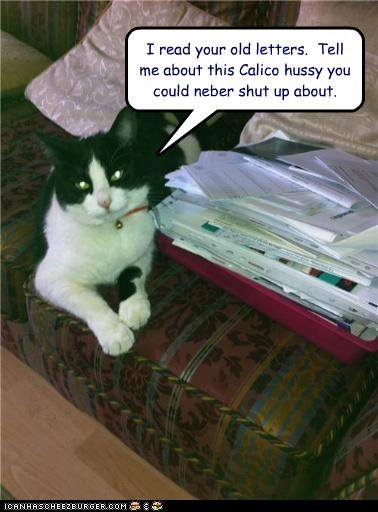 calico,caption,captioned,cat,hussy,jealous,jealousy,letter,old,read