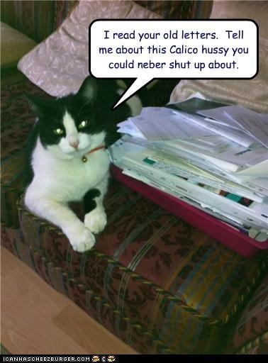 caption captioned cat jealous letter old read - 4963775488