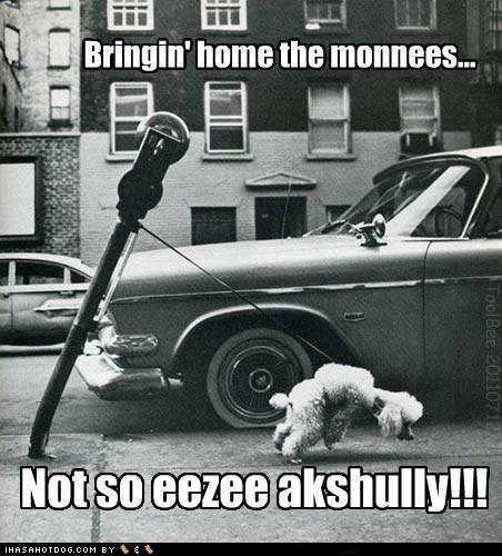lease money parking meter poodle work working - 4964040192