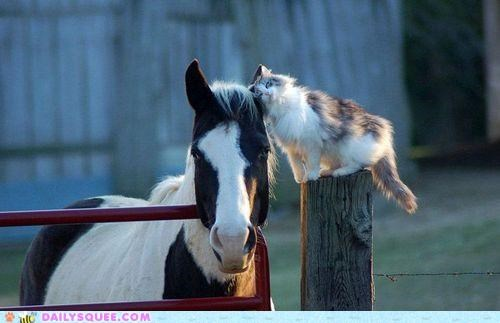 cat Hall of Fame horse Interspecies Love main mane nuzzling pun - 4964086784