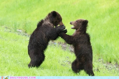 acting like animals bear bears comparison cub cubs exaggerating excited huge moby dick recalling salmon size story - 4964117248