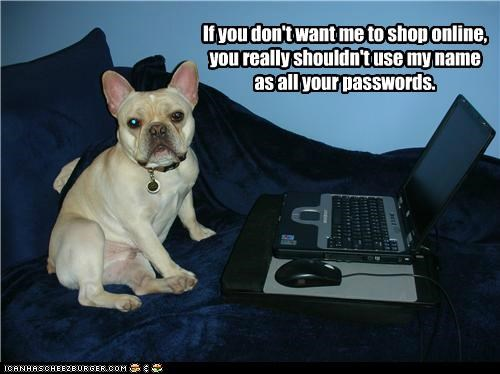 bed,clever,computer,french bulldogs,laptop,online shopping,password