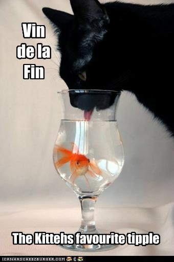 caption captioned cat drinking favorite fish glass pun tasting tipple water wine - 4964406784
