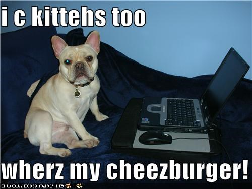 Cheezburger Image 4965274112