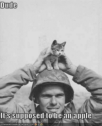 army Cats kittehs political pictures