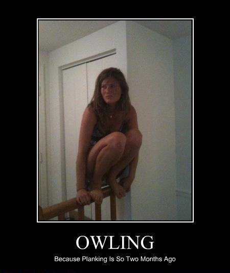 Morning Links,owling