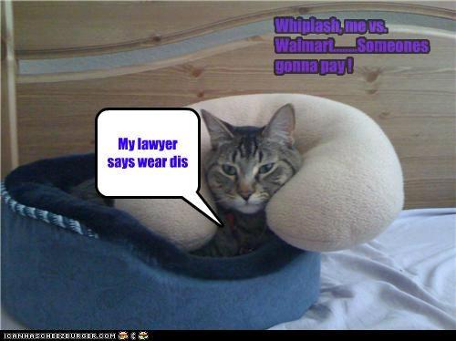 Cheezburger Image 4965711104