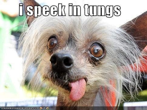 chinese crested funny face speak tongue - 4965719552
