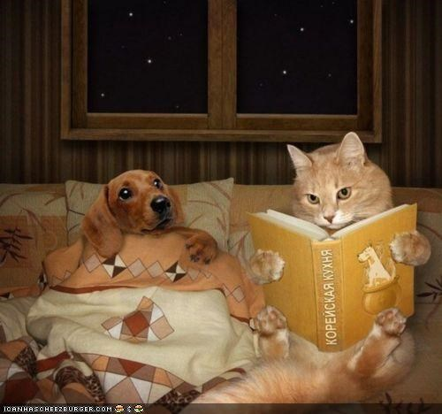 bedtime story books dogs fake goggies goggies r owr friends Interspecies Love photoshopped stories tucked in - 4965840640