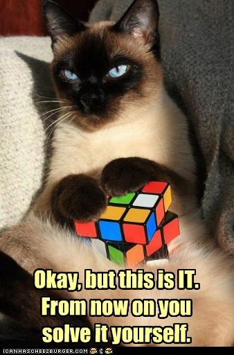 caption,captioned,cat,DIY,do it yourself,last time,Okay,rubiks cube,siamese