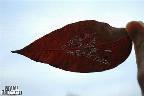 art bird leaf nature swallow - 4966028544