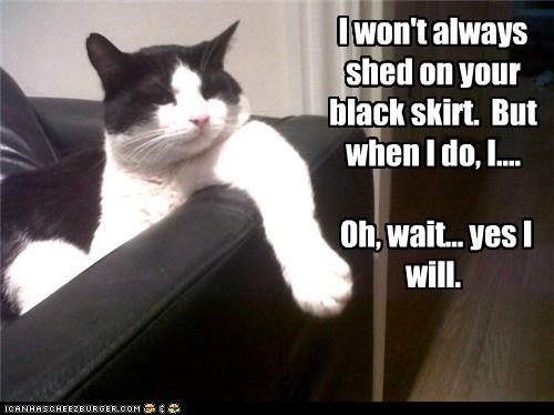 always black caption captioned cat i will shed skirt the most interesting man in the world wait wont yes