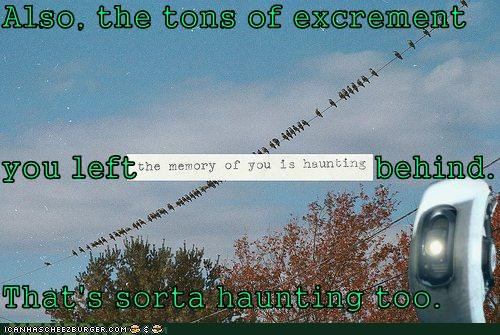 birds,excrement,haunting,hipsterlulz,memory