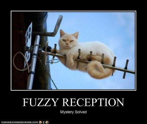 antenna,caption,captioned,cat,fuzzy,mystery,reception,solved
