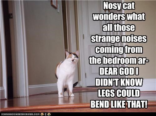 bedroom bending cannot unsee caption captioned cat do not want horrified innuendo legs location noises nosy strange wondering wonders - 4966678272
