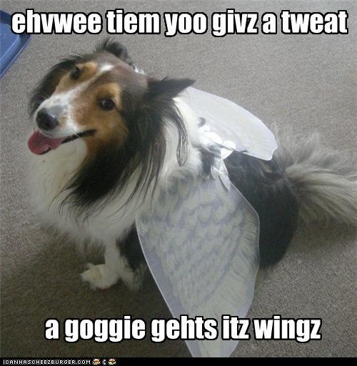 angel costume sheltie shetland sheepdog treats wings - 4968081408