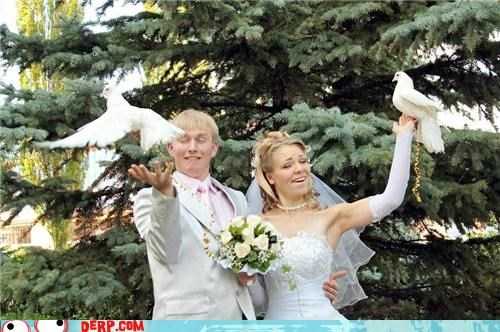 derp wedding - 4968736000
