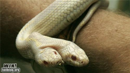 Snake with 2 heads wows Ukraine zoo