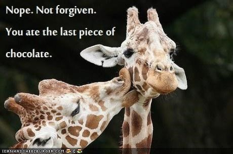 caption captioned chocolate forgiveness giraffes kissing relationships - 4970222336
